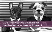 Que faites-vous de votre animal pendant votre journée au bureau ?