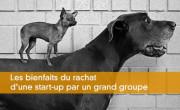 Les bienfaits du rachat d'une start-up par un grand groupe