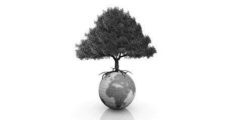 L'intérêt d'une démarche développement durable pour les TPE