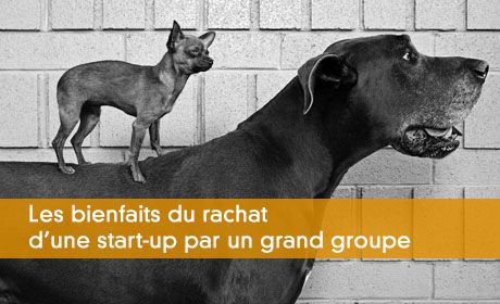 Les bienfaits du rachat d'une start-up par un grand groupe