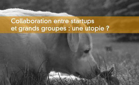 Ce que devrait être la collaboration entre startups et grands groupes